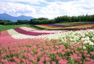Flower-Garden-Ideas-125